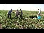 شاهد  الوجه الخفي لزراعة الطماطم في إيطاليا