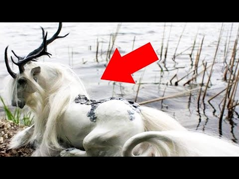 شاهد 10 فصائل خيول هي الأغرب والأجمل في العالم