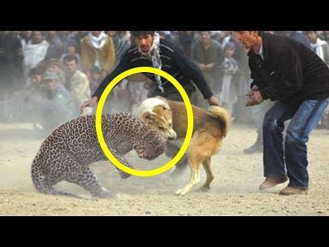 شاهد 15 حيوانًا أنقذوا حيوانات أخرى بشكل مثير للإعجاب