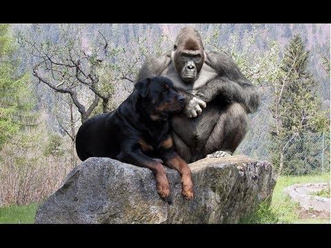 اشرس انواع الحيوانات تنقذ أخرى ضعيفة