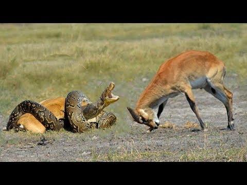 حيوانات تدافع عن صغارها باستماتة كبيرة