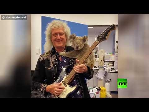 شاهد.. عازف فرقة Queen يعزف لحيوانات أستراليا المحروقة