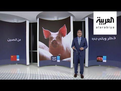 شاهد: وباء آخر يهدد البشرية ينتقل من الخنازير للإنسان