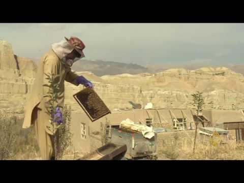 شاهد: المرأة الأفغانية وشهد العسل يزيل مرار الأيام