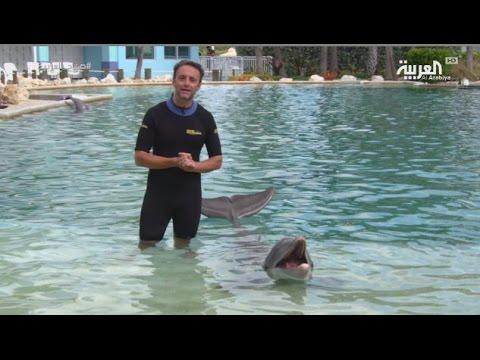 بالفيديو: تجربة السباحة مع الدلافين في