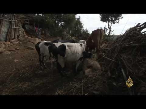 شاهد: منتزه سيمين الإثيوبي مهدّد بالتدمير